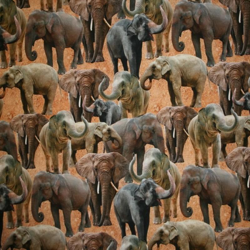 Bomulds jersey økotex digitalt print med elefanter-311