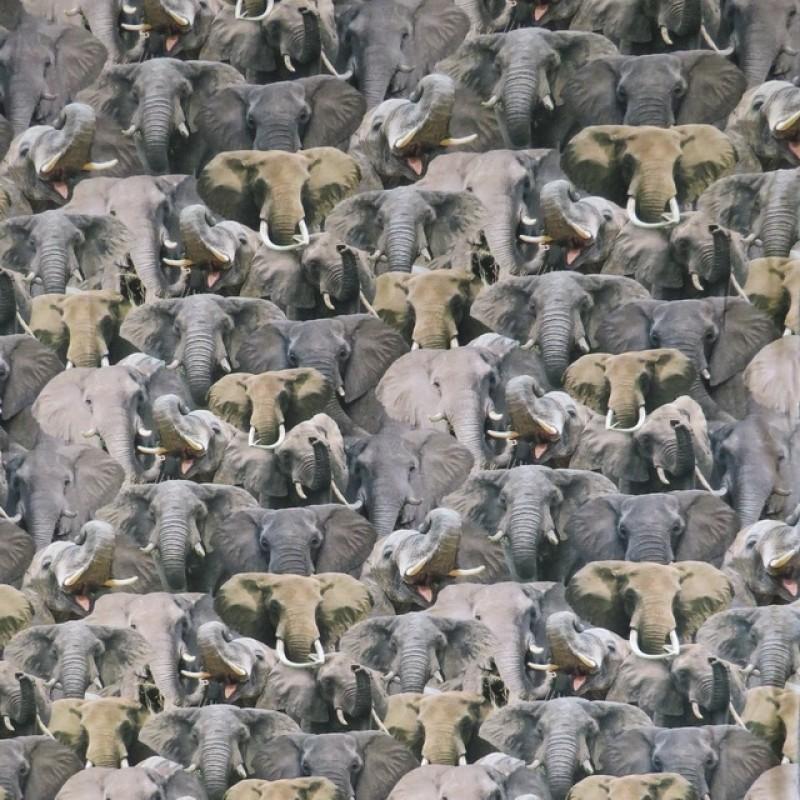 Bomulds jersey økotex digitalt print med elefanter i grå og beige-312