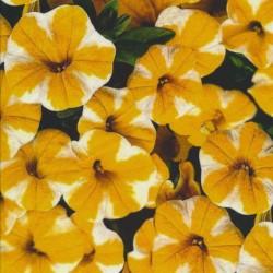 Bomuld/lycra økotex m/digitalt tryk med gule petunia