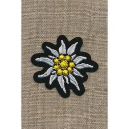Motiv m/blomst/Edelweis sort/hvid/gul-20