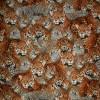 Bomulds jersey økotex digitalt print med leopard-012
