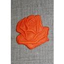 Motiv m/rose, orange